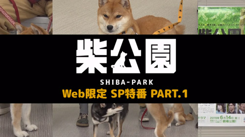 ドラマ「柴公園」Web限定SP特番(PART1)