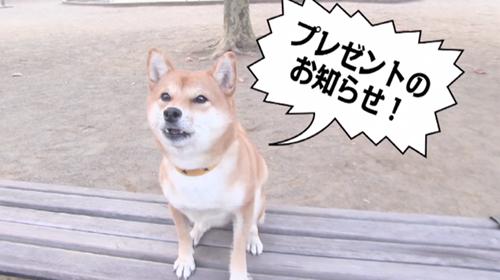 ドラマ「柴公園」DVD-BOXプレゼントキャンペーン