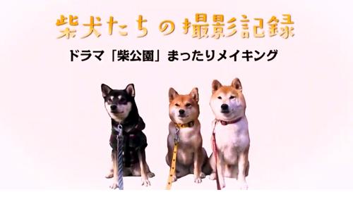 ドラマ「柴公園」DVD-BOX 特典メイキング映像一部公開!<2019年4月26日発売>